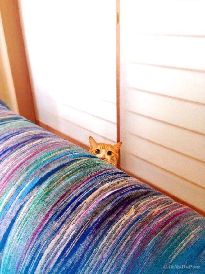 Джиджи иКинако: как рыжий кот спас старика японца отдепрессии