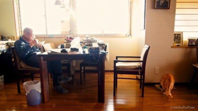 Картинки по запросу ДЖИДЖИ И КИНАКО: КАК РЫЖИЙ КОТ СПАС СТАРИКА-ЯПОНЦА ОТ ДЕПРЕССИИ