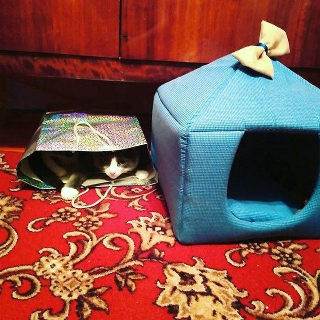 Типичная ошибка новичка: думать, что чем дороже домик ты купил коту, тем охотнее он будет там играть. Ага, щас. кулибины, приколы, экономия, юмор