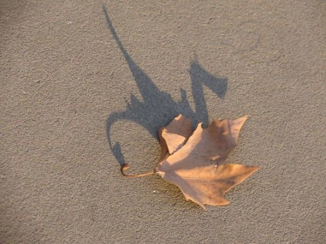The Shadow Of This Leaf Looks Like A Dragon