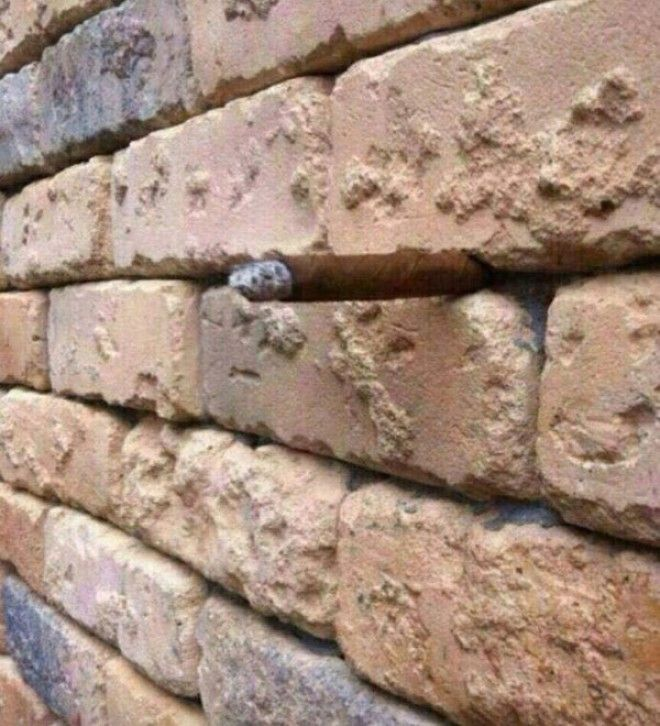 just another brick in the wall illusion (3)