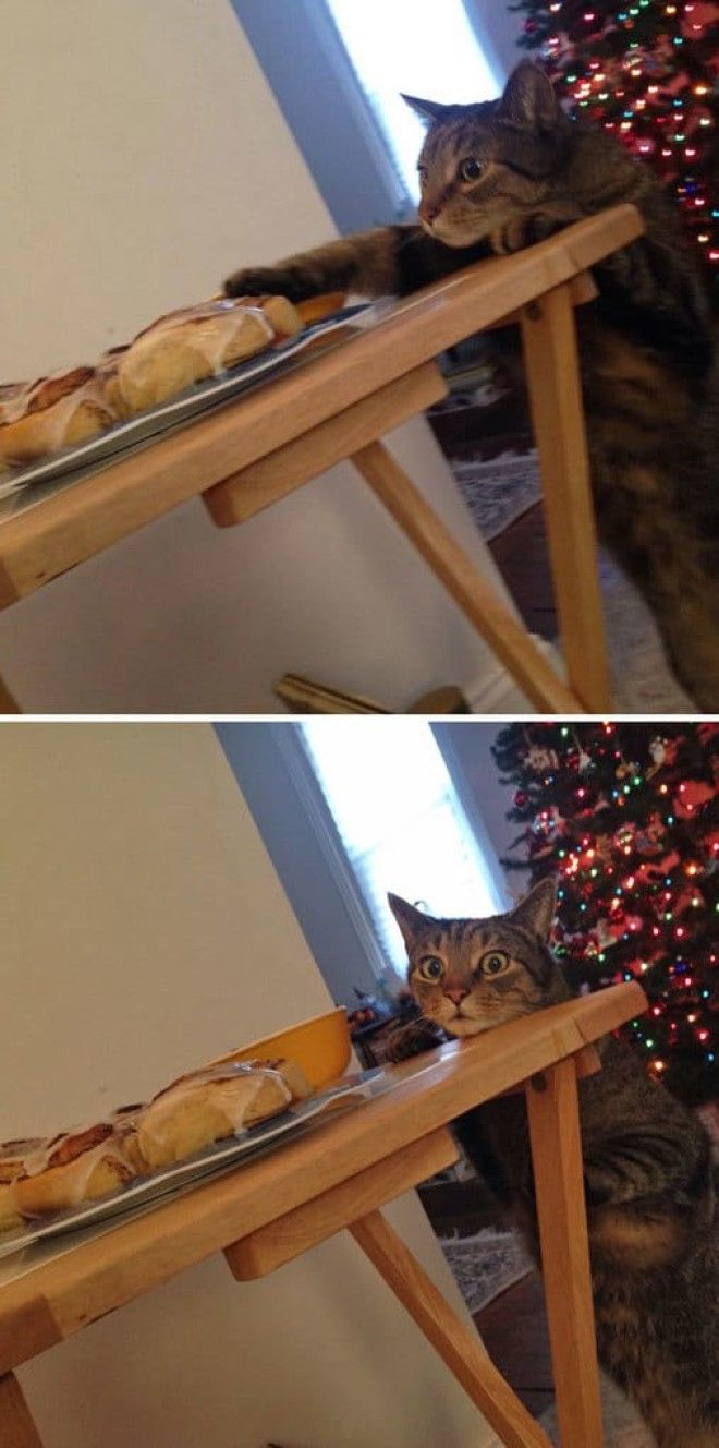 Cat Busted Trying To Touch The Cinnamon Rolls