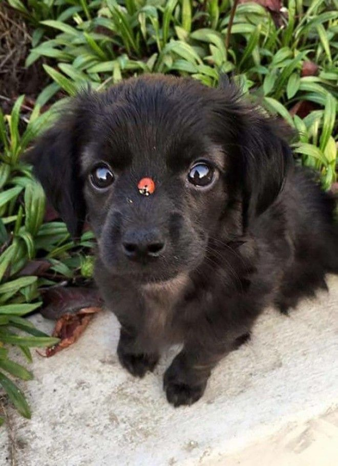 A Ladybug Boopin The Snoot Of The Pupper
