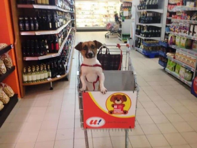 Italian Grocery Store Gets DogFriendly Carts So You Can Shop With Your Dog
