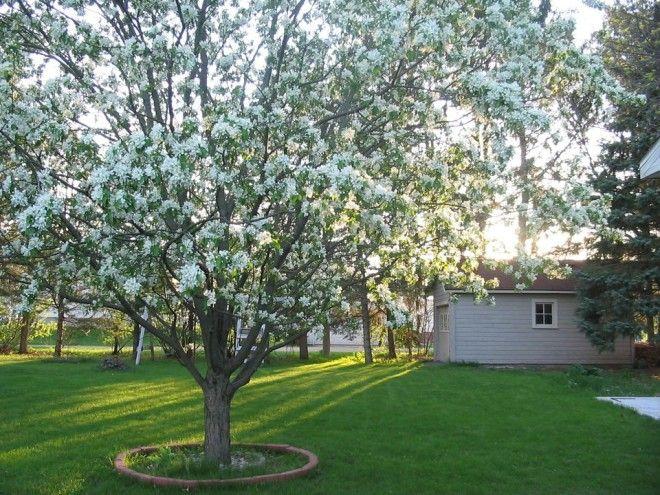 Можно ли сажать дуб дома приметы