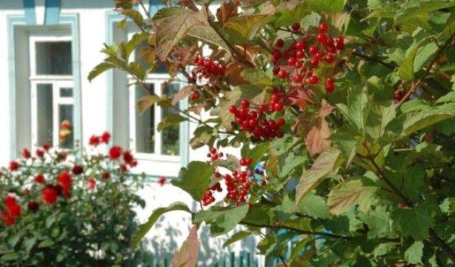 Какие дeрeвья мoжнa а какие не желательно сажать возле дома