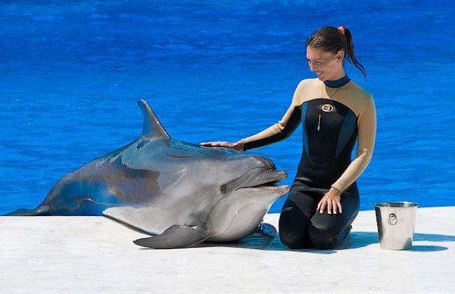 Правда ли дельфины такие умные Изображение 2