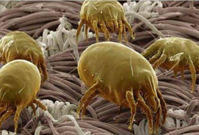 Очищаємо матрац від паразитів за 5 хвилин.